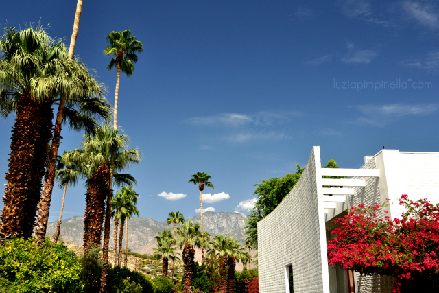 luzia pimpinella - travel | california roadtrip - the parker palm springs