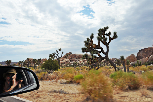 luzia pimpinella BLOG | travel tuesday | joshua tree kalifornien & warum ich roadtrips mag  | joshua tree california & why i love roadtrips