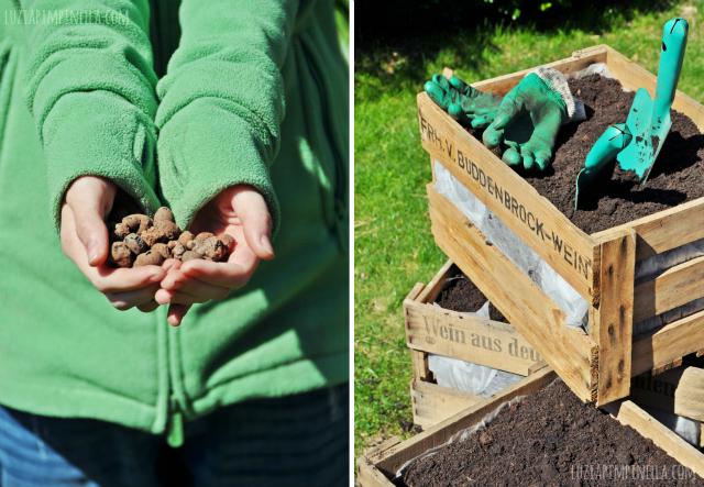 luzia pimpinella blog | DIY gemüseboxen aus alten weinkisten | DIY vegetable growing boxes made of old vine crates