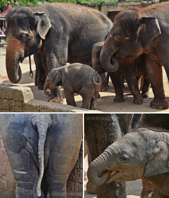 luzia pipinella BLOG | travel tuesday | elefanten-familie mit baby im erlebnis-zoo hannover | elephant family with baby at the zoo hannover, germany