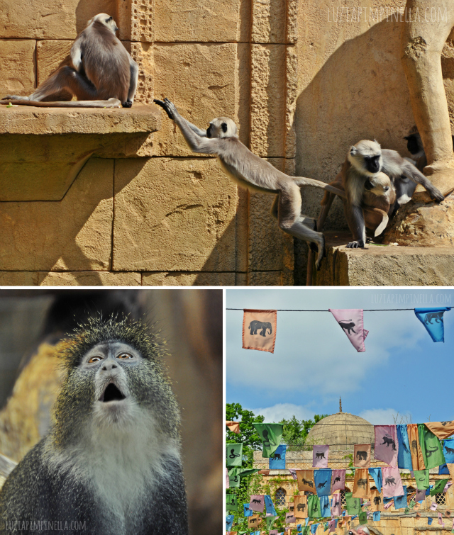 luzia pipinella BLOG | travel tuesday | affen im dschungelalast des erlebnis-zoo hannover | monkeys at the jungle palace of the zoo hannover, germany