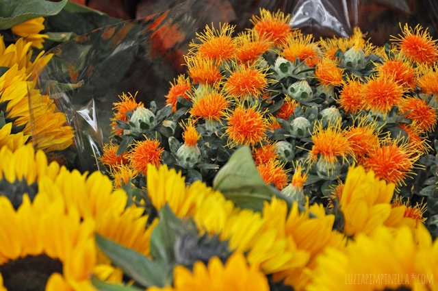 luzia pimpinella | travel - flower shopping | der zaterdagmarkt in antwerpen, belgien | the zaterdagmarket in antwerp, belgium