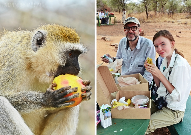 luzia pimpinella | travel tanzania | safari tarangire national park - lunch picknick