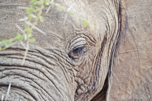 luzia pimpinella | travel tanzania | safari tarangire national park - elephants eye