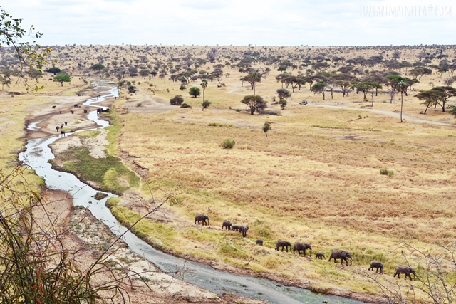 luzia pimpinella | travel tanzania | safari tarangire national park - elephant family at river