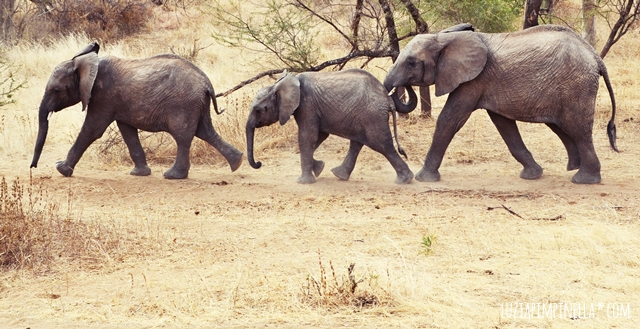 luzia pimpinella | travel tanzania | safari tarangire national park - elephant kids
