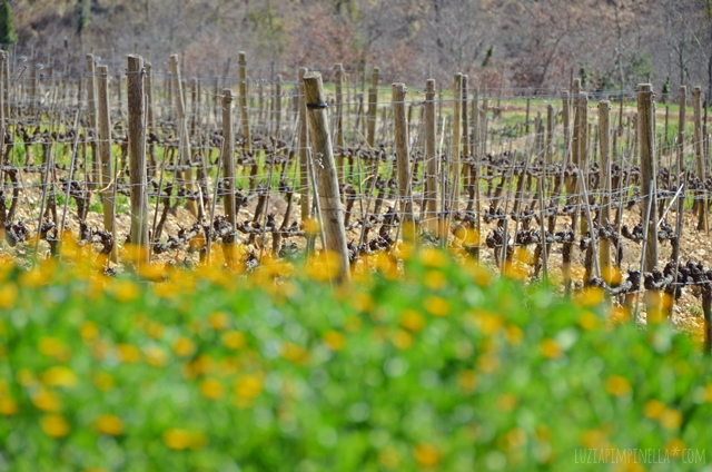 luzia pimpinella | travel | unsere toskana-reise zu ostern | our tuscany easter trip