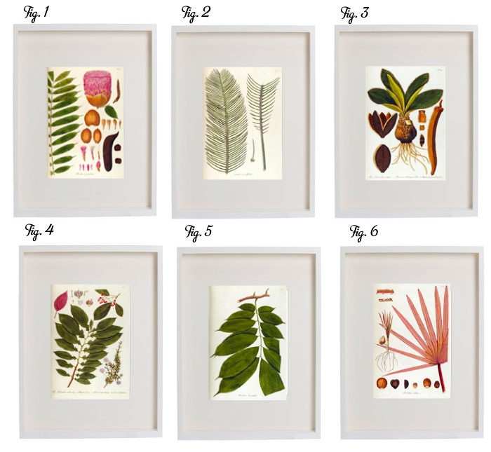 interior | vintage pflanzen- & tier- illustrationen zum ausdrucken | free vintage botanical & animal printables | luziapimpinella.com