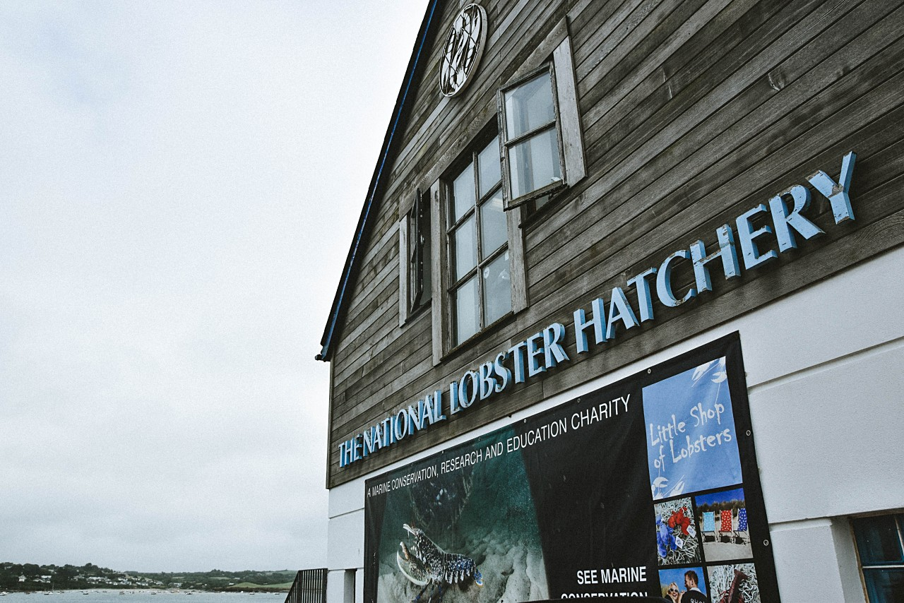 In 25 Bildern durch Padstow in Cornwall – Besuch der National Lobster Hatchery | Cornwall & Südengland Rundreise | luziapimpinella.com